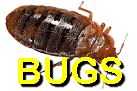 Bugs, Bug Stoppers, Bug Bashers, Bug Beaters, bug busting