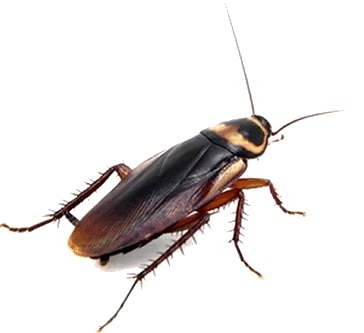 Pest Control Spain. Bugs and Pest Control Spain. Pest Kill Spain