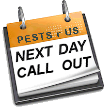 wasps pest control costa blanca, waspkill spain