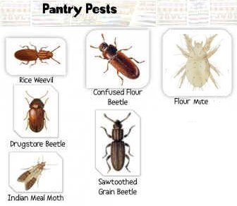 Kitchen& Pantry Bugs Pest Control Costa Blanca Spain by