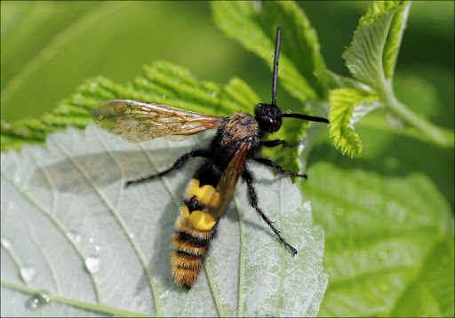 wasp identification costa blanca spain by pests r us costa blanca spain