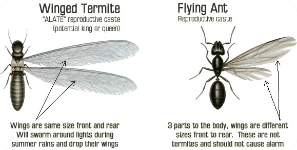 More about Termites Pest Control Costa Blanca Spain by ...